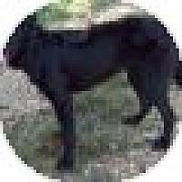 Adopt A Pet :: Tazzie - Denver, CO