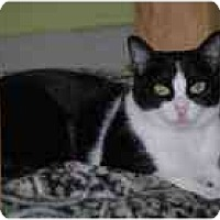 Adopt A Pet :: Natasha - Marietta, GA