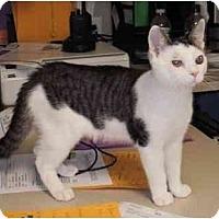 Adopt A Pet :: Oswald - Maywood, NJ