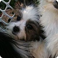 Adopt A Pet :: Gabby - Hilliard, OH