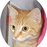 Adopt A Pet :: Katniss - Mobile, AL