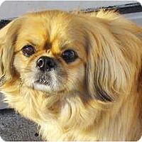 Adopt A Pet :: Huckleberry - Orange Park, FL