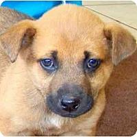 Adopt A Pet :: LOIS - Wakefield, RI