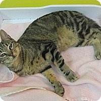 Adopt A Pet :: Tabitha - Mobile, AL