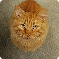 Adopt A Pet :: Robin - Bonita Springs, FL