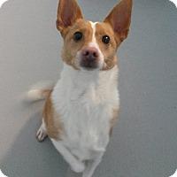 Adopt A Pet :: Ferris - Muskegon, MI