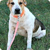 Adopt A Pet :: Eddie - Lufkin, TX