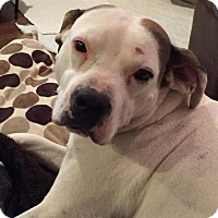 Adopt A Pet :: Cadence - Yukon, OK