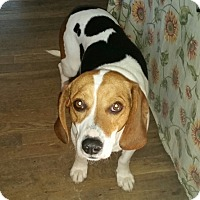 Adopt A Pet :: Arnold - Richmond, VA