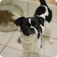 Adopt A Pet :: Hauchi - Carey, OH