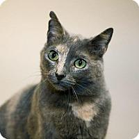 Adopt A Pet :: Aster - Alameda, CA