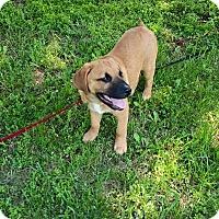 Adopt A Pet :: Lakota - Winchester, VA
