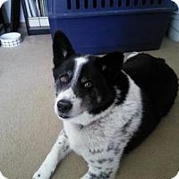 Adopt A Pet :: Marley - Bellevue, NE