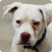 Adopt A Pet :: Titan - Toccoa, GA