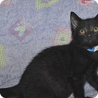 Adopt A Pet :: Jack - Medina, OH