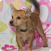 Adopt A Pet :: Buster - Elmwood Park, NJ
