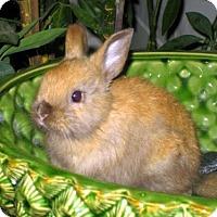 Adopt A Pet :: Luigi Jr. - Los Angeles, CA