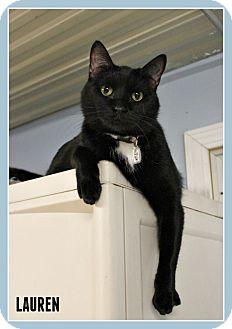 Domestic Shorthair Cat for adoption in New Richmond,, Wisconsin - Lauren