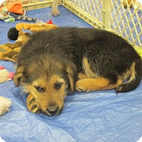 Adopt A Pet :: Jett - Rocky Mount, NC