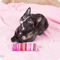 Adopt A Pet :: Isabelle - Lambertville, NJ