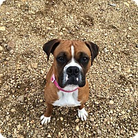 Adopt A Pet :: Coda - Reno, NV