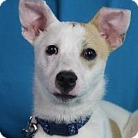 Adopt A Pet :: Dawson - Minneapolis, MN