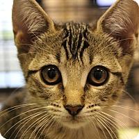 Adopt A Pet :: Blanche - Sarasota, FL