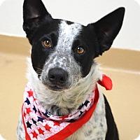 Adopt A Pet :: Sarge - Dublin, CA