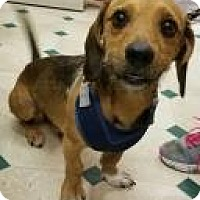 Adopt A Pet :: Thor - Ottumwa, IA