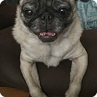 Adopt A Pet :: Pella - Grapevine, TX