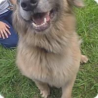 Australian Shepherd Mix Dog for adoption in Orlando, Florida - Dobby