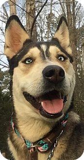Husky/Shepherd (Unknown Type) Mix Dog for adoption in Powder Springs, Georgia - MYSTIQUE