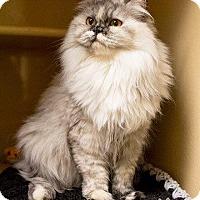 Adopt A Pet :: Simone - Marlborough, MA