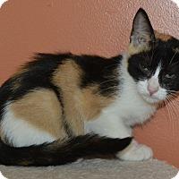 Adopt A Pet :: Pumpkin - Michigan City, IN