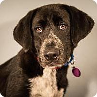 Adopt A Pet :: Razorback - Berkeley Heights, NJ