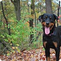 Adopt A Pet :: Sasha - New Castle, PA