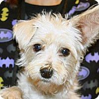 Adopt A Pet :: Benji - Wildomar, CA