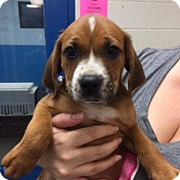 Adopt A Pet :: Peter - Barnegat, NJ