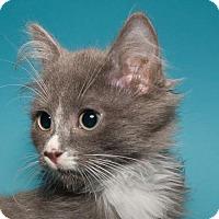 Adopt A Pet :: Bonnie - Jersey City, NJ