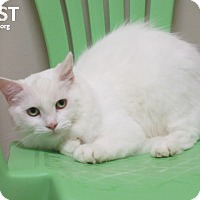 Adopt A Pet :: Frost - Elizabeth City, NC