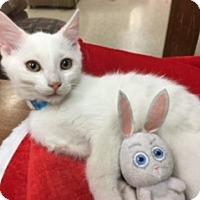 Adopt A Pet :: Snowflake - Medina, OH