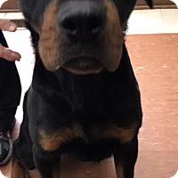 Adopt A Pet :: Sammy - Sayville, NY