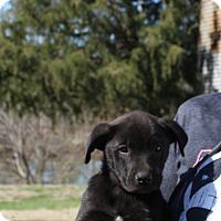 Adopt A Pet :: Tessie~meet me~! - Glastonbury, CT
