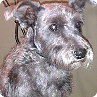 Adopt A Pet :: Sadie - cameron, MO