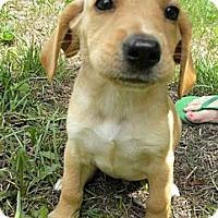 Adopt A Pet :: Reggae - Novi, MI