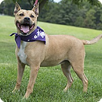 Adopt A Pet :: Sassie - Silver Spring, MD