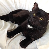 Adopt A Pet :: Newman - Winchendon, MA