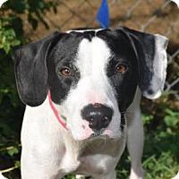 Adopt A Pet :: Wayne - Bradenton, FL