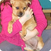 Adopt A Pet :: Friendly - Middletown, RI