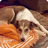 Adopt A Pet :: Molly - Homewood, AL